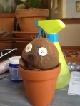 plant head2