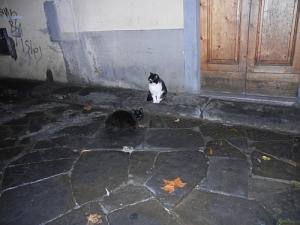 1-two-cats-ardiglione